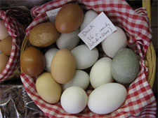 duck eggs of different colors in small basket